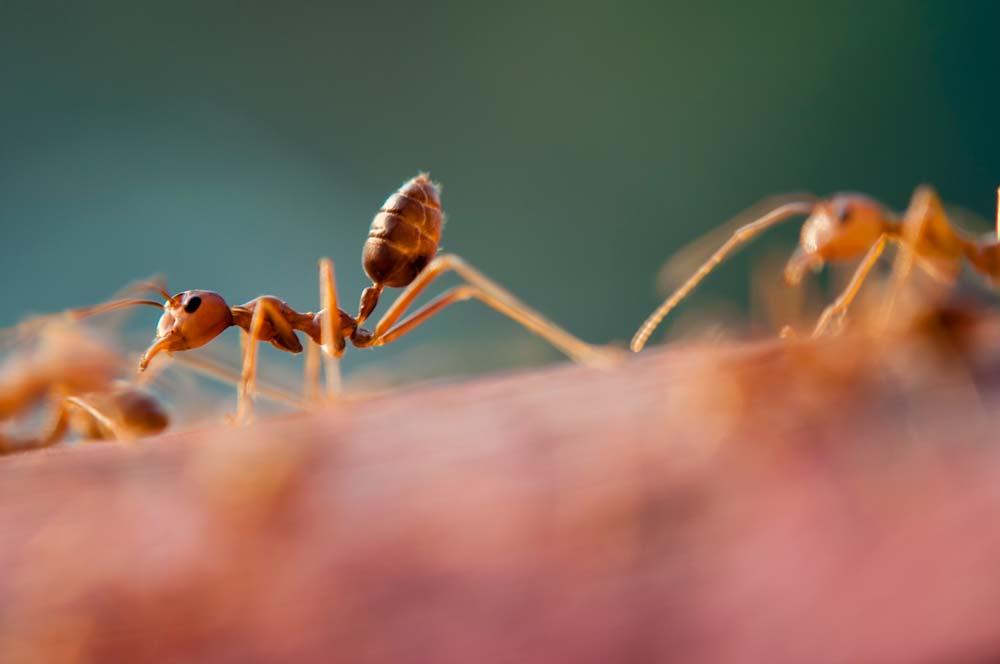 Got Ants?