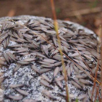 Termites-Start-Swarming-in-Spring