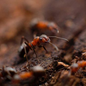controlling-ants