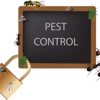 Keep Pests Away in the Summer