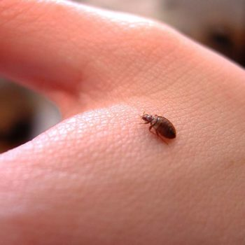 How to Easily But Safely Remove a Tick