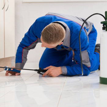 Contractor's Best Pest Control: Termites Making a Meal of Your Home?