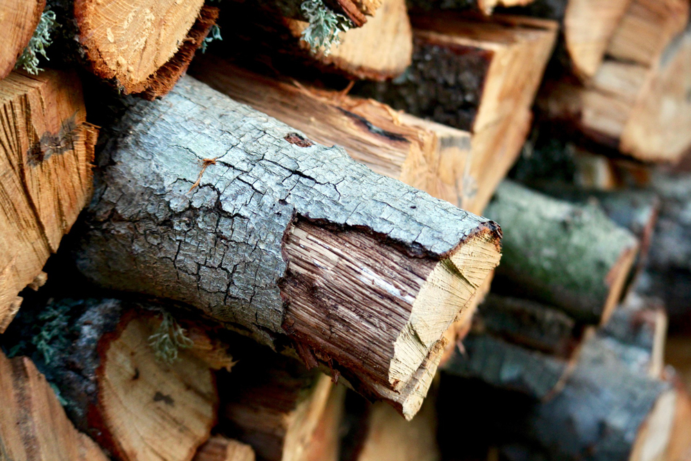 Keep Pests from Invading Your Firewood with These Tips