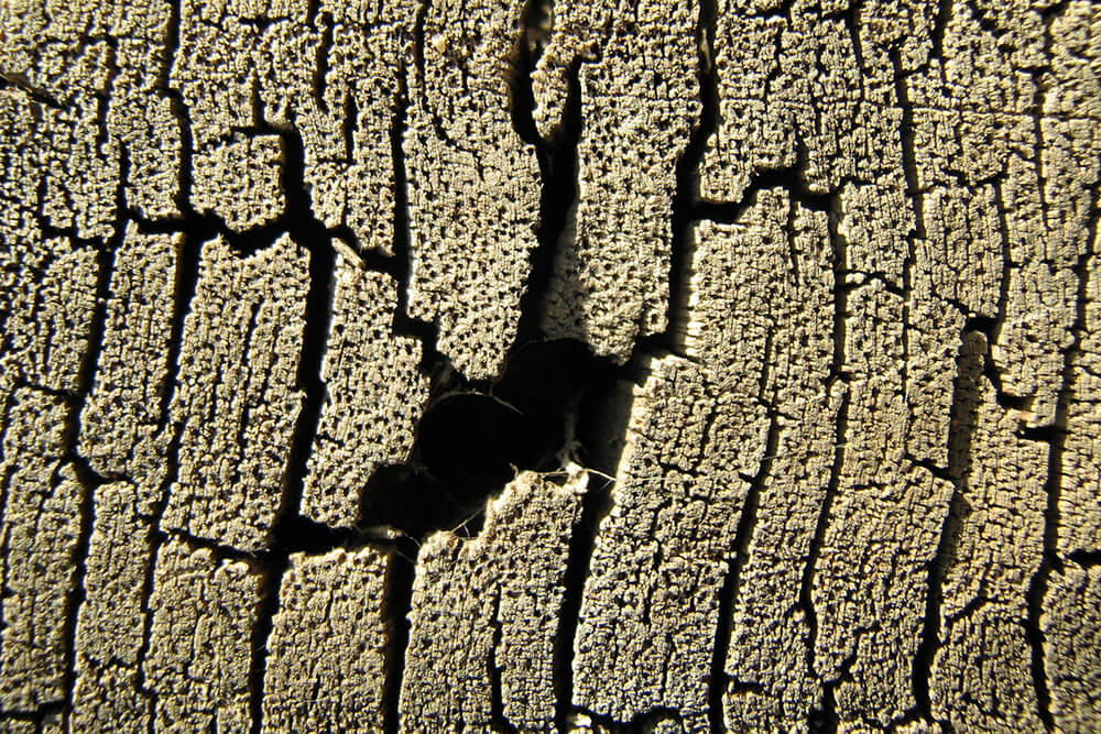 Are Termites Covered by Homeowner's Insurance?