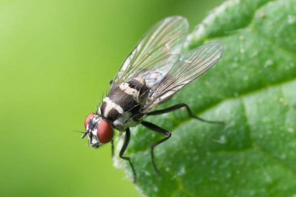 why-flies-are-grosser-than-you-originally-thought