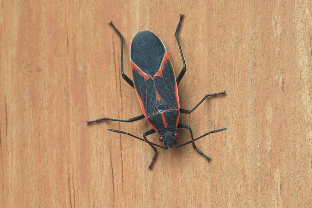 The Winter Bugs Eager To Invade Your Home According To Contractor's Best Pest Solution