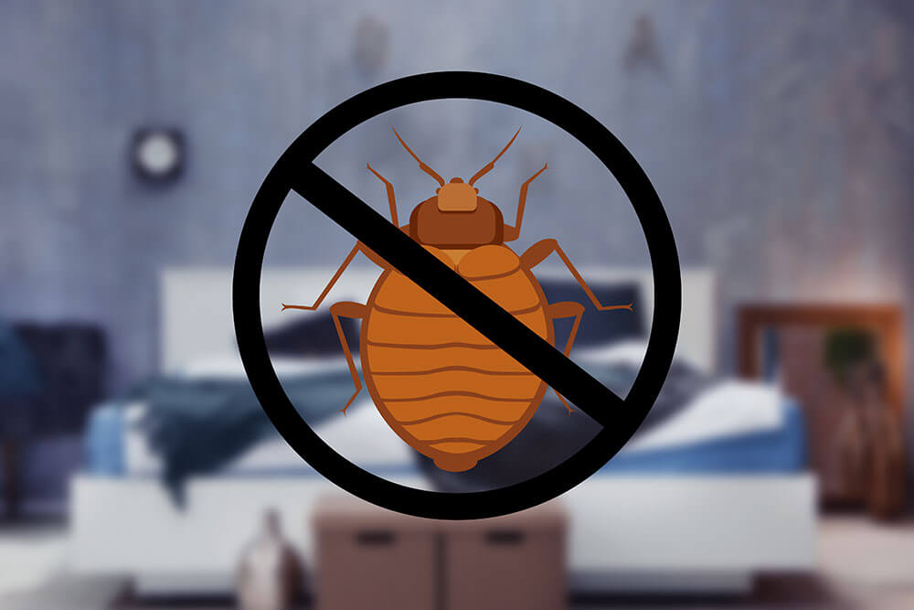 Preparing Your Home For Bedbug Treatment