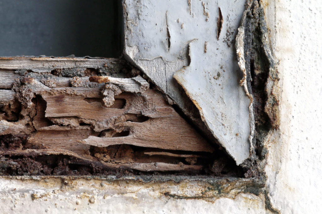 5 Signs You Have Termites