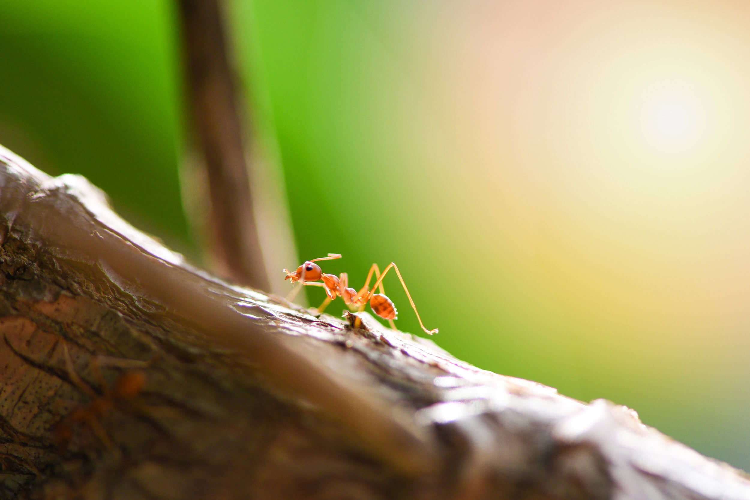 8 Ant Types You Don't Want in Your Home