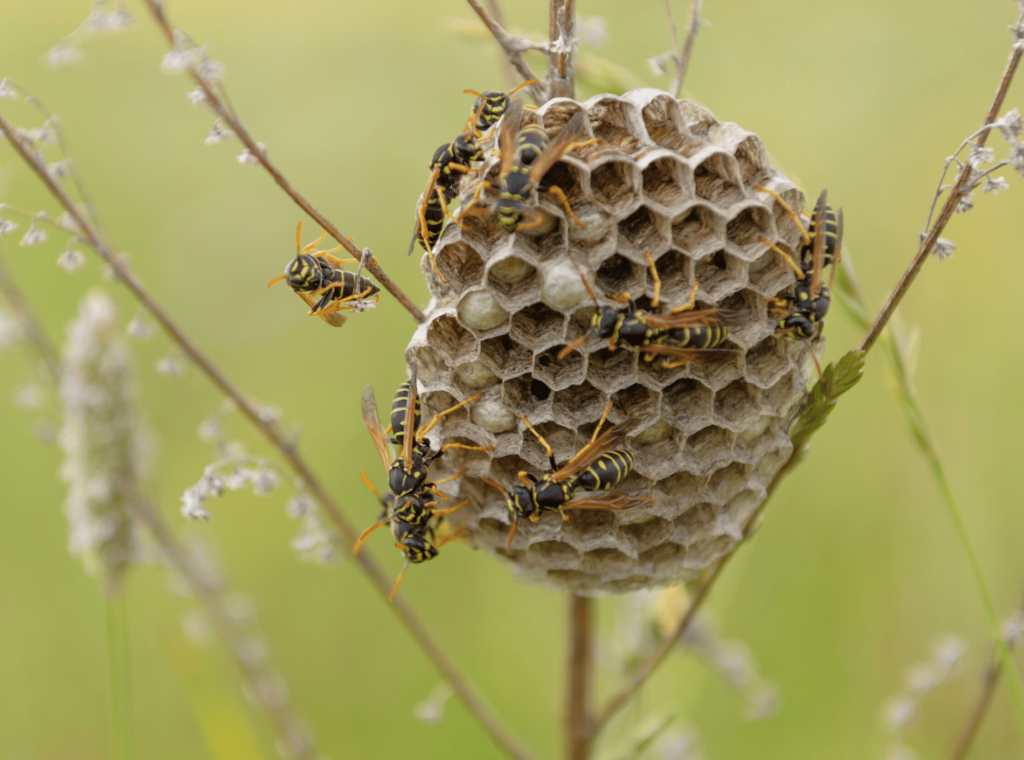 Avoid These 5 Things That Attract Wasps